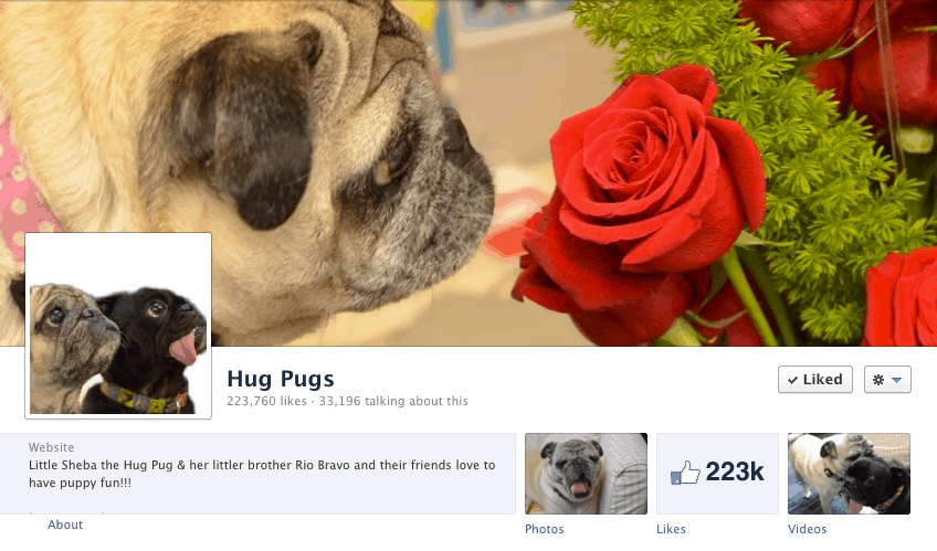 Hug Pugs Cover Photo
