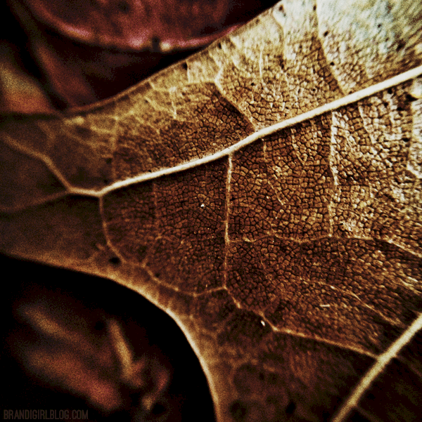 winter-leaves-1