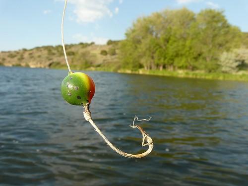 Fishhook by zetrules