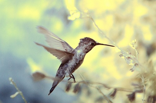 Google's Hummingbird Search Algorithm Update