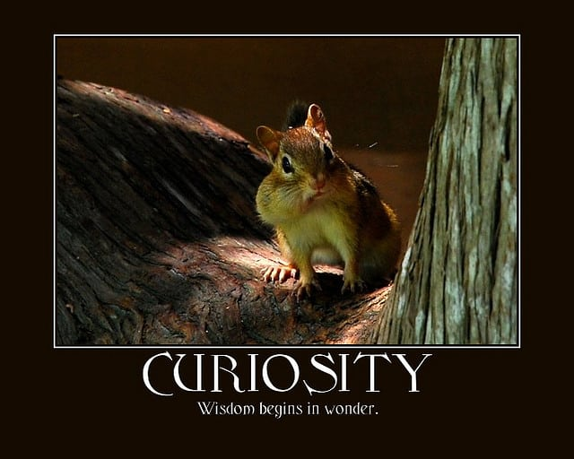 Make the reader curious