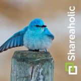 Shareaholic_Twitter_Bird_is_the_Word